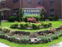 Windsor_oaks